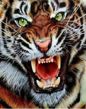Angry Tiger Diamond Dot Picture