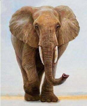 Elephant Diamond Dot Picture