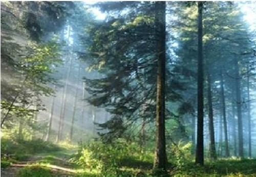 Forrest Trees Diamond Dot Picture